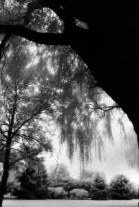 Shade Under the Willow