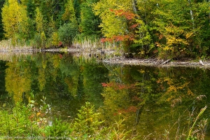 Reflection in Green in Fall
