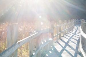Arboretum Boardwalk in the Fall Sun