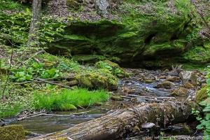 Moss's Stream