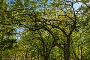 Graceful Trees