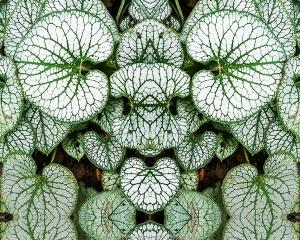 Leafy Learer