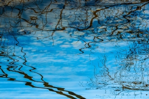 Bare Tree Reflection 1