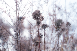 Fall Weeds in Fog